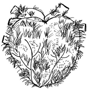 A drawing of a human heart that's getting furry.